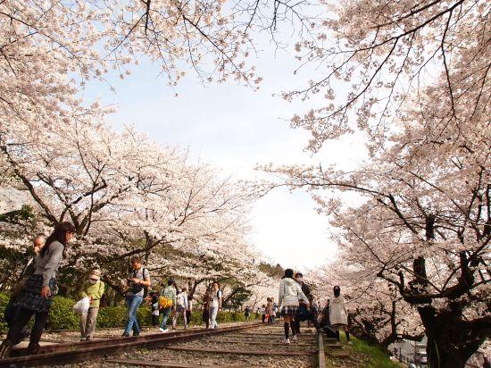 【桜満開(*・ω・)】蹴上インクライン・山科疎水のお花見ツーリング@京都