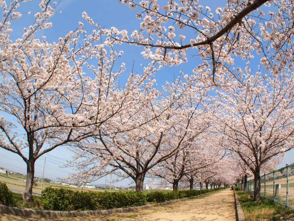 稲美町~龍野公園~姫路城 お花見ツーリング@兵庫