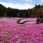 三田の花のじゅうたんへ、芝桜を見に行こうツーリング@兵庫