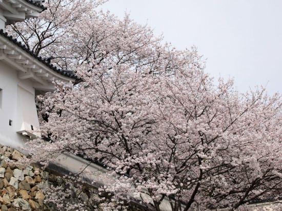 龍野城と龍野公園へお花見ツーリング@兵庫