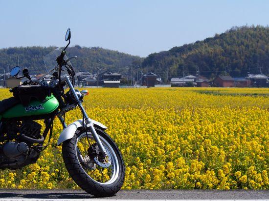 御津まで、今が見頃の菜の花を見に行こう@兵庫【バンバン200】