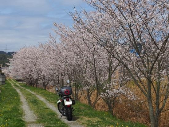 播磨中央公園へお花見ツーリング@兵庫