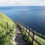 【今が見頃】灘黒岩水仙郷の海に向かって咲く水仙が満開@兵庫県淡路島