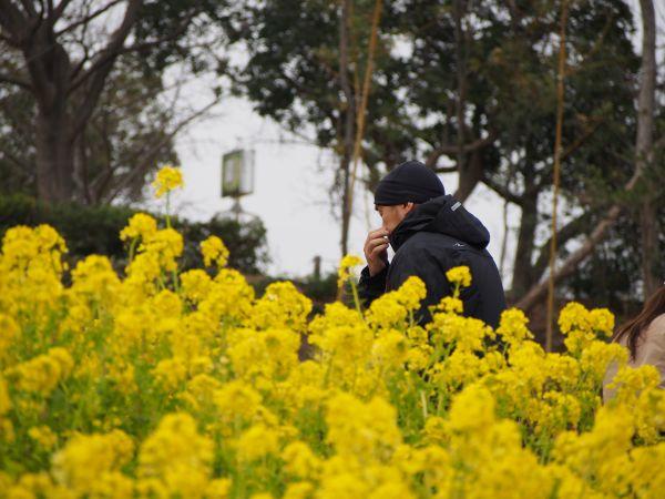 菜の花が満開@神戸総合運動公園
