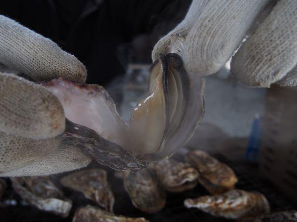 プリプリのおいしい牡蠣