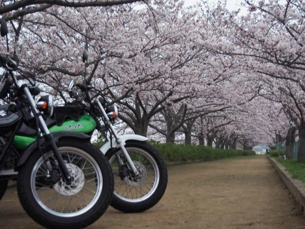 春のツーリングシーズンやね