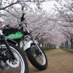 【駐車場は17時までです】桜満開!いなみ野水辺の里公園@兵庫県稲美町