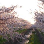 桜とダムカードとおいしいもの!プラス、落とし物を拾った話【バンバンズ200】