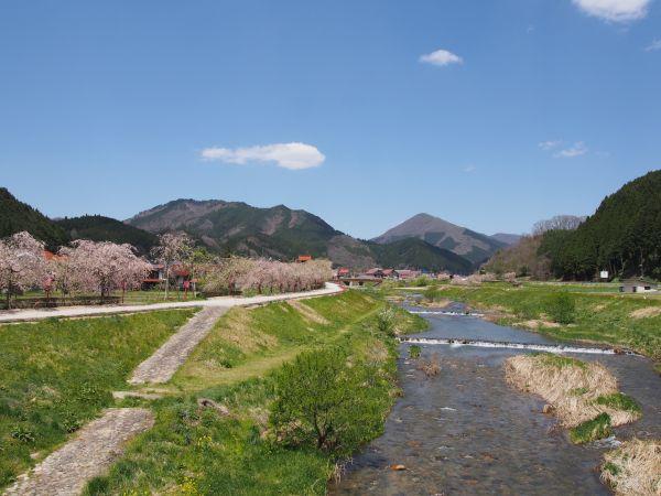 がいせん桜が綺麗!