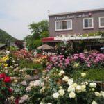 見頃の姫路バラ園で、バラトーストにバラ紅茶を楽しんできた(*・ω・)@兵庫県姫路