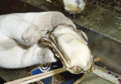【心構えは大丈夫?w】漁師のお店!稲荷丸で牡蠣食べ放題@岡山
