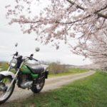 お花見ツーリング&昨日の日岡山公園の夜桜@兵庫【バンバン200】