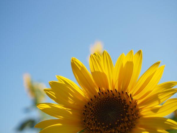 花びらもきれいだよ