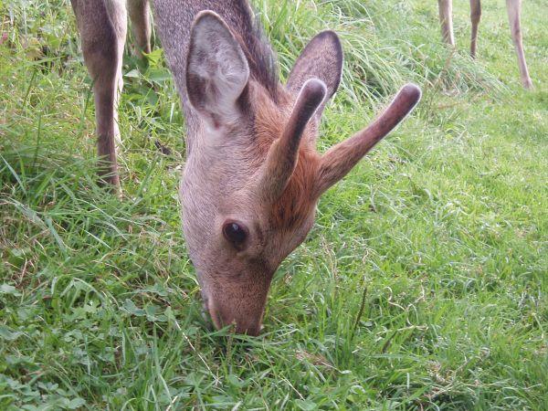 鹿さん、きつねさんは定番