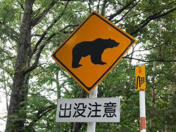 熊さんには合ってない
