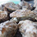 【焼きがき大豊】牡蠣食べ放題でたんまり食べてきた@兵庫県相生