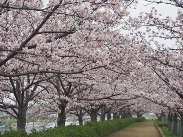 桜の穴場スポット