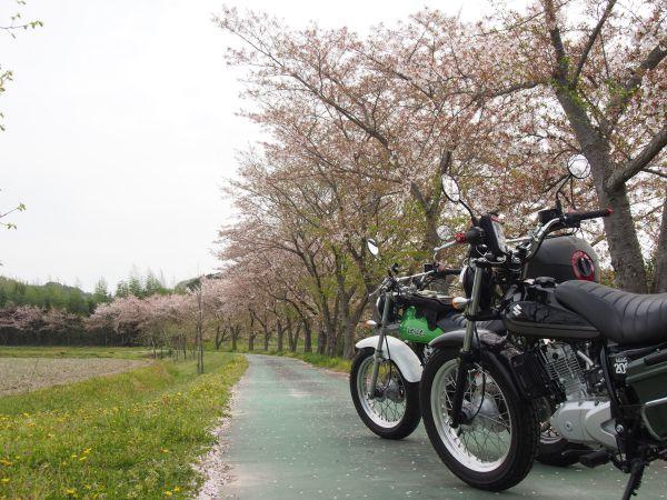 桜を探してプラっとツーリング(R428~県道75号線)@兵庫【バンバンズ200】