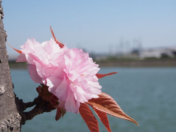 兵庫県稲美町の琴池