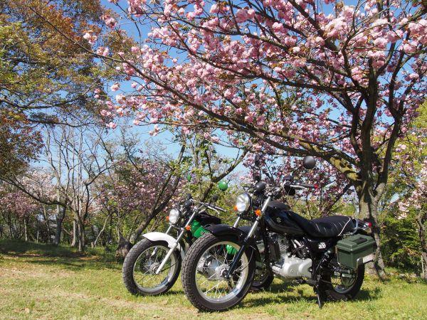 【八重桜が見頃】満開の琴池と日笠山に行ってみた@兵庫県稲美町&高砂