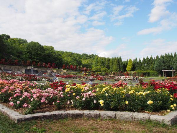 一期一会(笑)パスコロのジェラート&バラの季節には播磨中央公園へ@兵庫県加西・加東
