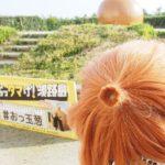【インスタ映えするよ!】淡路島たまねぎを楽しめるこのスポットを私は強くおすすめしたい