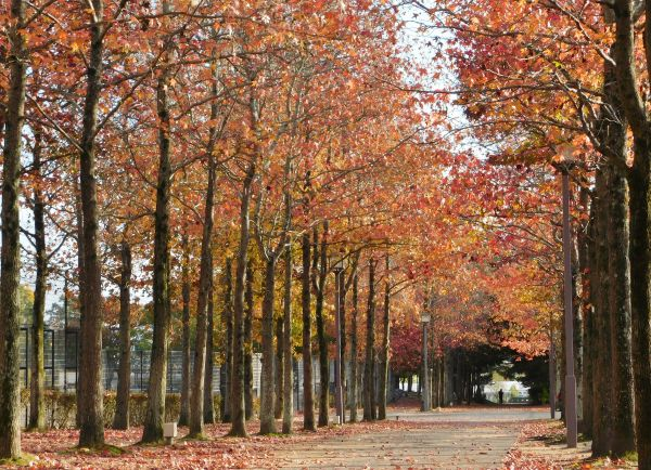 公園に秋を探しに行った話、ちょっぴりバンバンの話