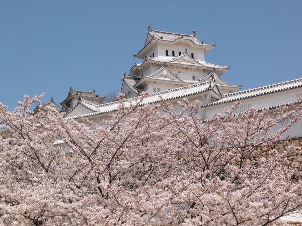 【桜満開!】桜の時期の姫路城・バイク駐輪場について@兵庫県姫路
