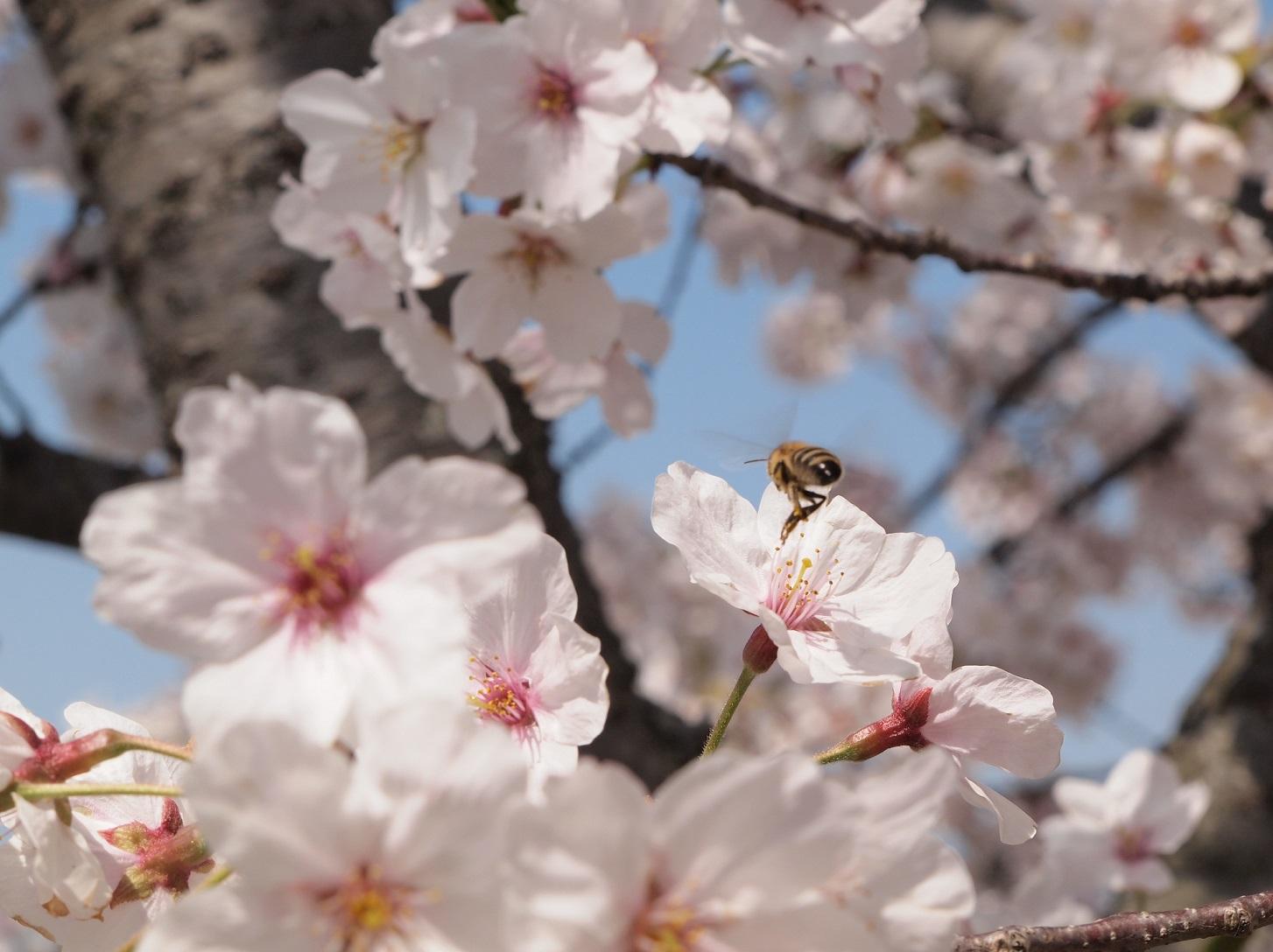 花粉ニモマケズ、コロナニモマケズ