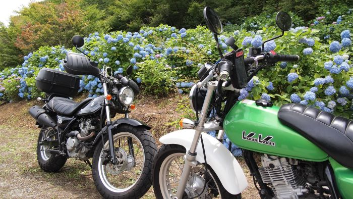 GoProもって金剛寺と伽耶院に紫陽花を見に行ってきた@兵庫県三木市