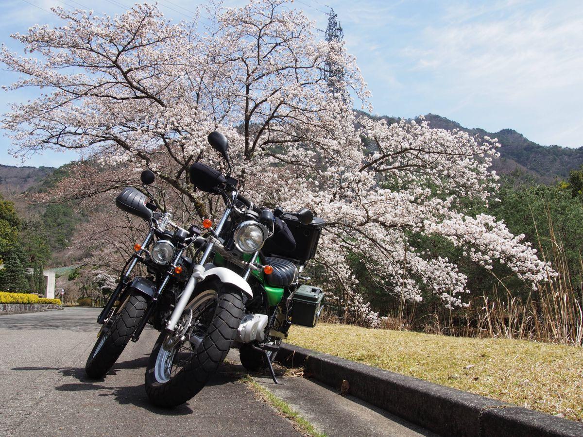 花粉ニモマケズ、コロナニモマケズ【2021】